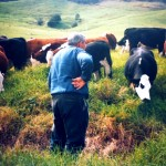 Lyndsey's father Martin and the herd